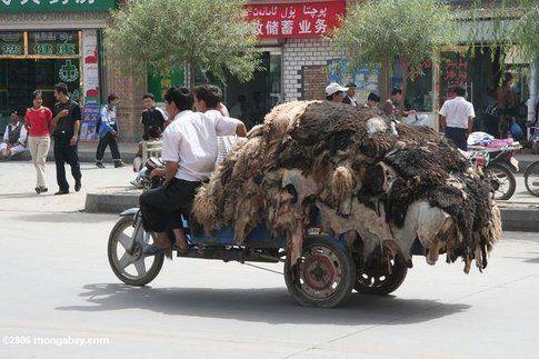Becchino, anzi no, trasporto pellicce