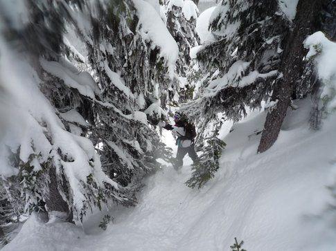 Snowboard tra i boschetti