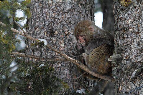 Decisamente diversi dai nostri scoiattoli