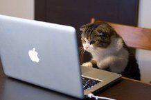 Un social network per animali?