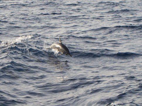 Delfini - Foto di Simone Carletti