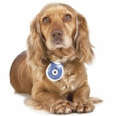 Pet's eye-view camera