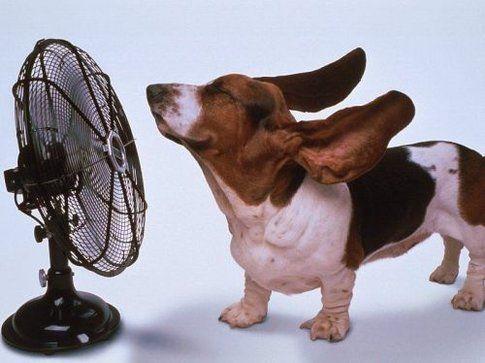 La forza di un ventilatore!