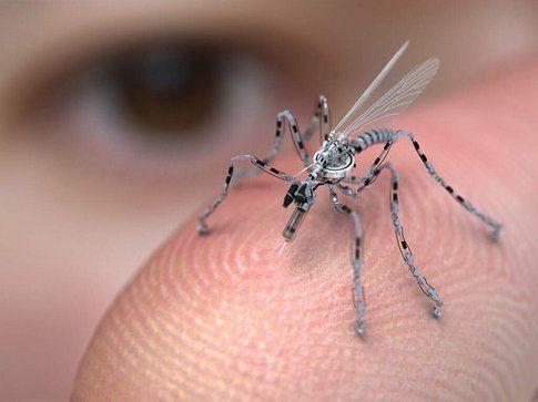 La puntura della zanzara!