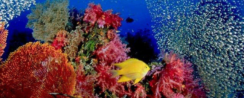 2012/08/06/life_under_andaman_sea