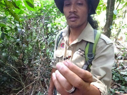 Anto, la nostra guida nella giungla di Bukit Lawang