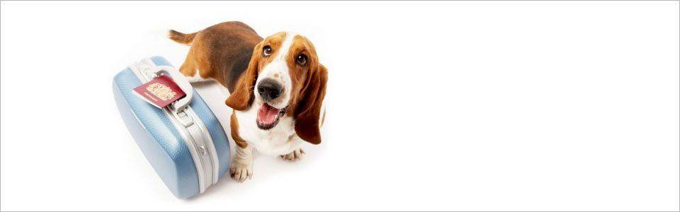 In viaggio con il cane: gli accessori indispensabili