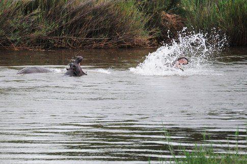 Ippopotami al Kruger Park ©MarziaKeller