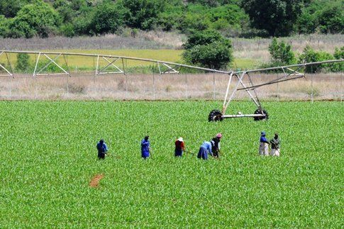 Braccianti in Mpumalanga