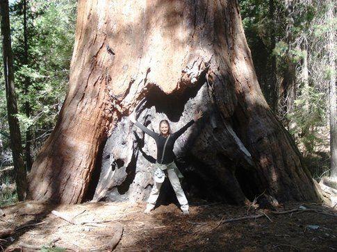 Le sequoie giganti di Mariposa Grove