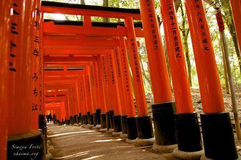 Percorso di torii rossi a Fushimi Inari - Foto di Simona Forti