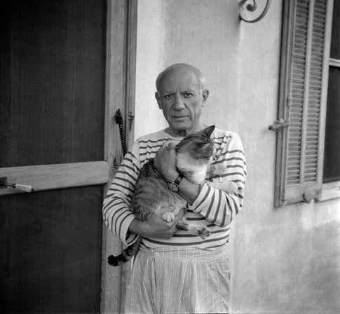 il gatto e Picasso