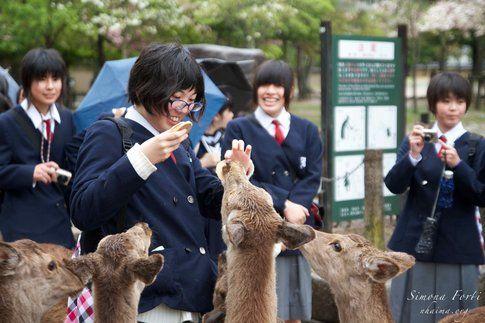 Parco di Nara - Foto di Simona Forti
