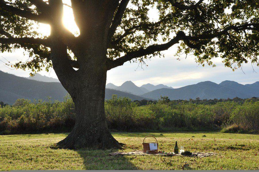 Platbos_Reserve_Oak_Tree_Picnic