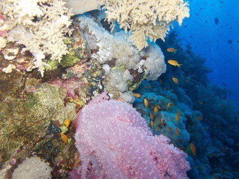 Mar Rosso - Foto di Simone Carletti