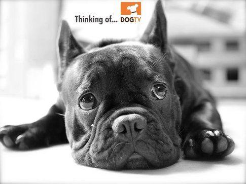 Immagine promozionale DogTV - immagine da pagina ufficiale facebook DogTv channel