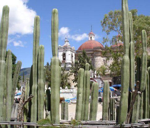 Steccato di cactus a Mitla – Oaxaca © Francesco Gardella - © LonelyPlanet
