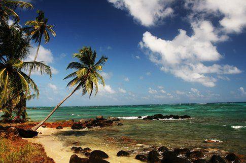 Isole del mais