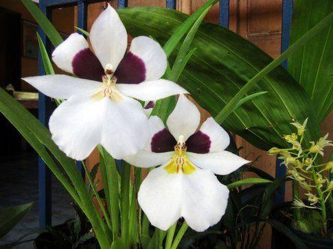 Volontariato centro Orchidee Panama
