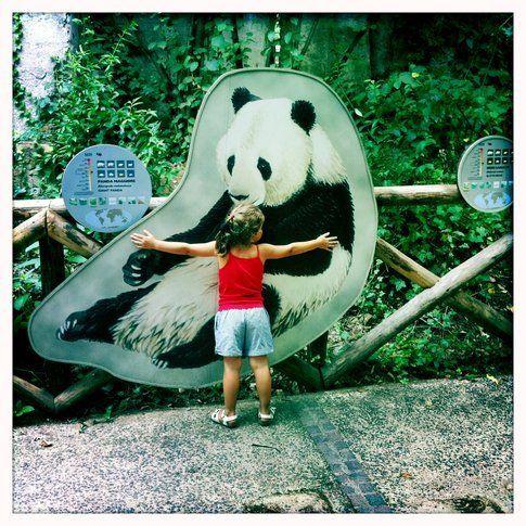 desidero un panda