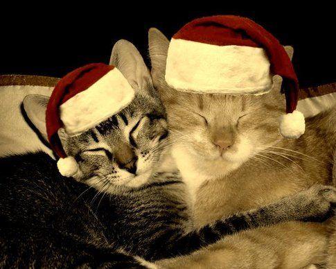 Buon Natale Fanciulle :3 (tuija2005 on Flickr)