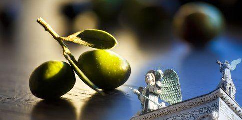 Olive nella cornice di Lucca