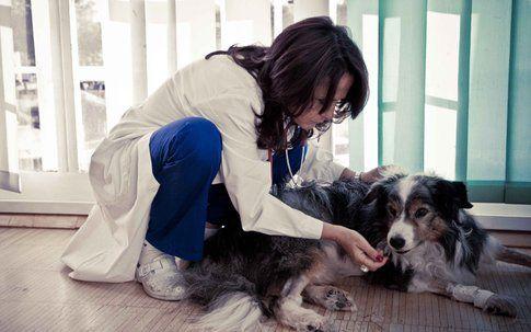 Emergenza veterinaria - foto da sito SkyUno HD