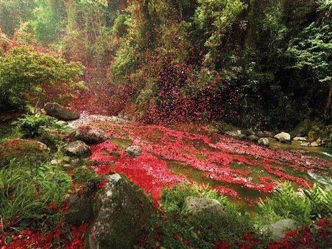landscape verde e petali rossi