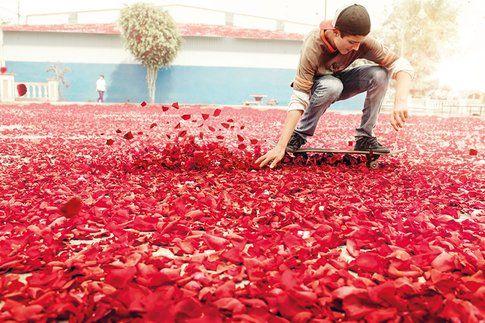 una strada ricoperta da migliaia di fiori