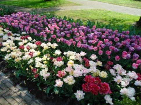 I meravigliosi giardini di Keukenhof . Foto: Parliamodiviaggi