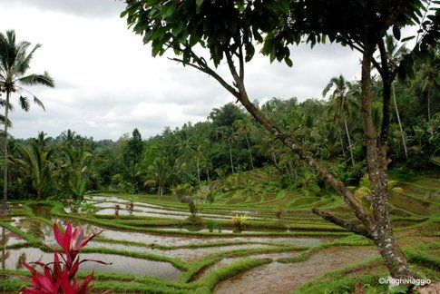 Bali - Foto: In Ogni Viaggio