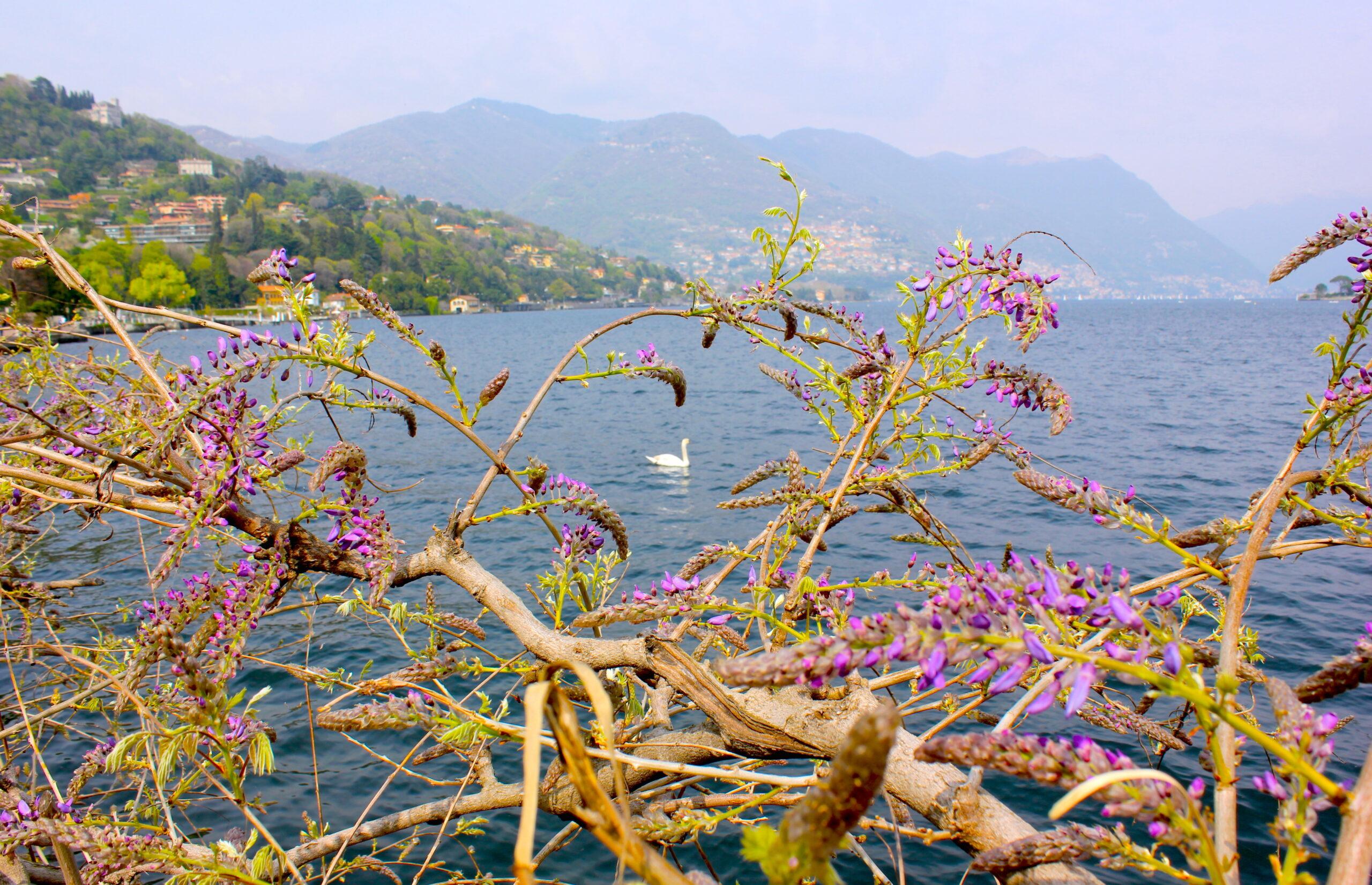 Piccolo vademecum per innamorarsi del Lago di Como