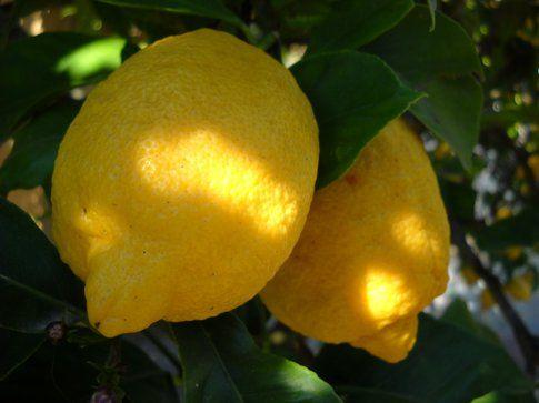 Emulsione al Limone e Olio Extravergine d'Oliva per rinforzare le unghie