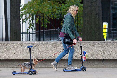 Naomi Watts e il suo cagnolino
