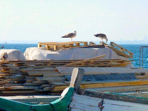 Gabbiani alle Isole dei Principi - foto di Elisa Chisana Hoshi