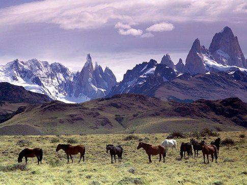 Cavalli al pascolo in Patagonia