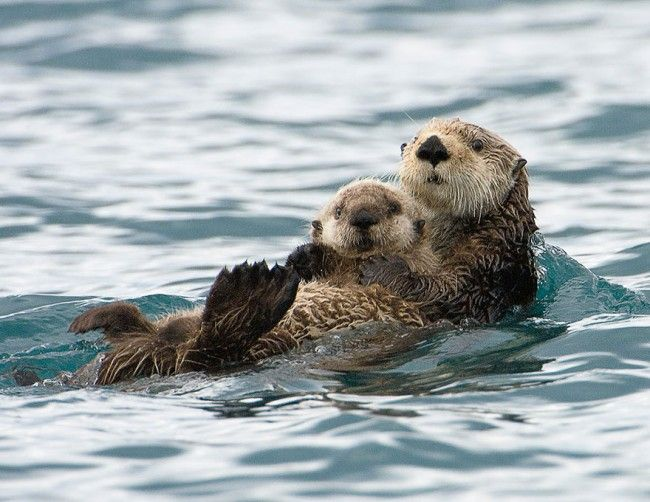 Le più belle fotografie di mamme e cuccioli nel mondo animale