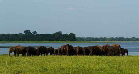 Parco Nazionale Minneriya - Sri Lanka