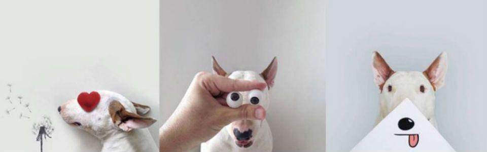 Jimmy Choo, il Bull Terrier tra fotografia e illustrazione