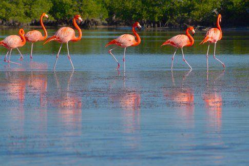 Río Lagartos, Yucatan, Mexico - by Adam Baker