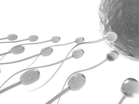 Fertilità maschile: la frutta secca può aiutarla