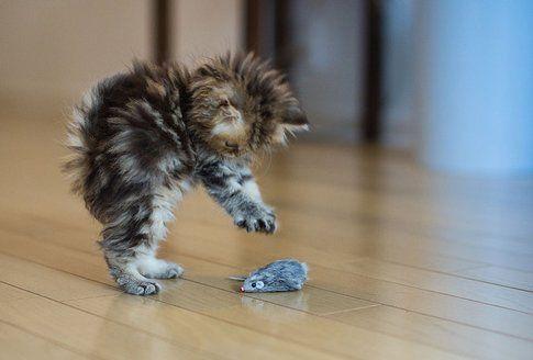Gatti: 6 cose che solo chi vive con loro può capire!