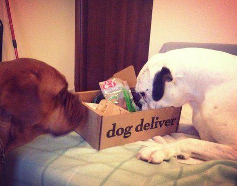 Achille (il boxer) e Cora (la dogue) alle prese con Dog Deliver