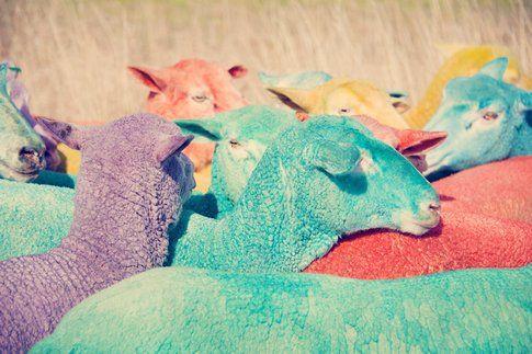 Rainbow Sheep III