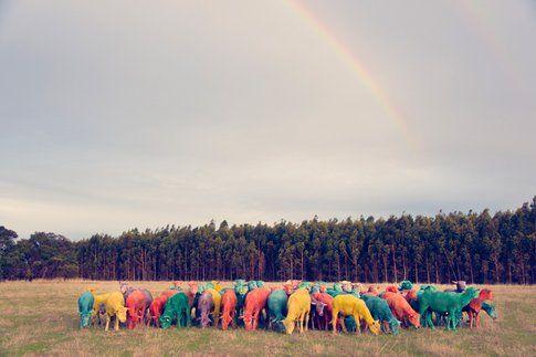 Rainbow Sheep I