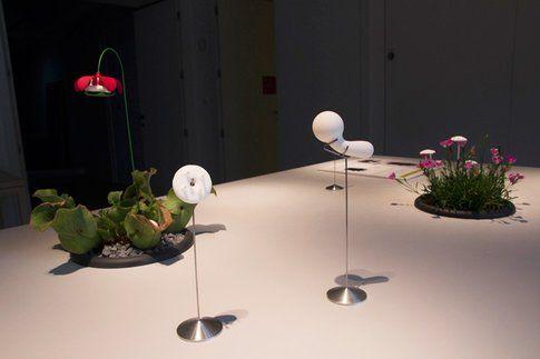 oggetti per aumentare l'assunzione di cibo e promuovere la crescita della Sarracenia