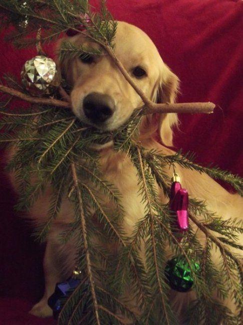Buono quest'albero di Natale! (1morethan2.com)