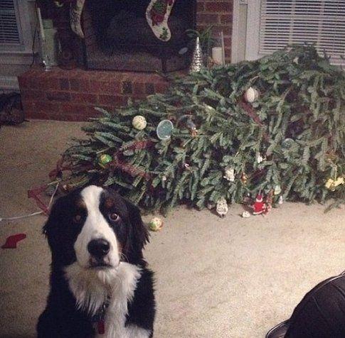 Per fortuna sei tornato, l'albero è svenuto! (imgur.com)