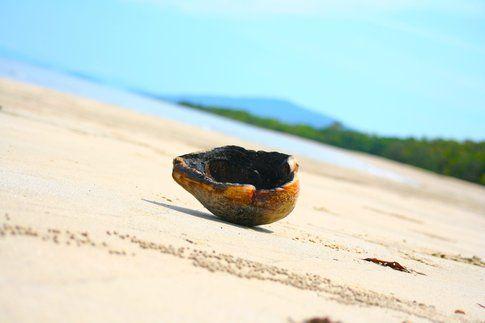 Noce di cocco a Cape Tribulation - foto di Elisa Chisana Hoshi
