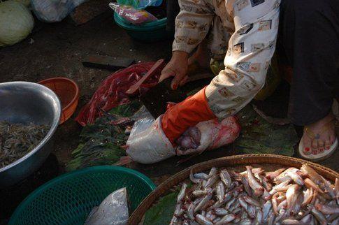 Pesce Cambogia